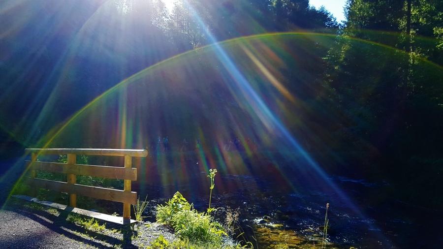 Sonnenstrahlen auf dem Weg